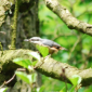 Nuthatch at Willow Bridge by Danny Mitchell